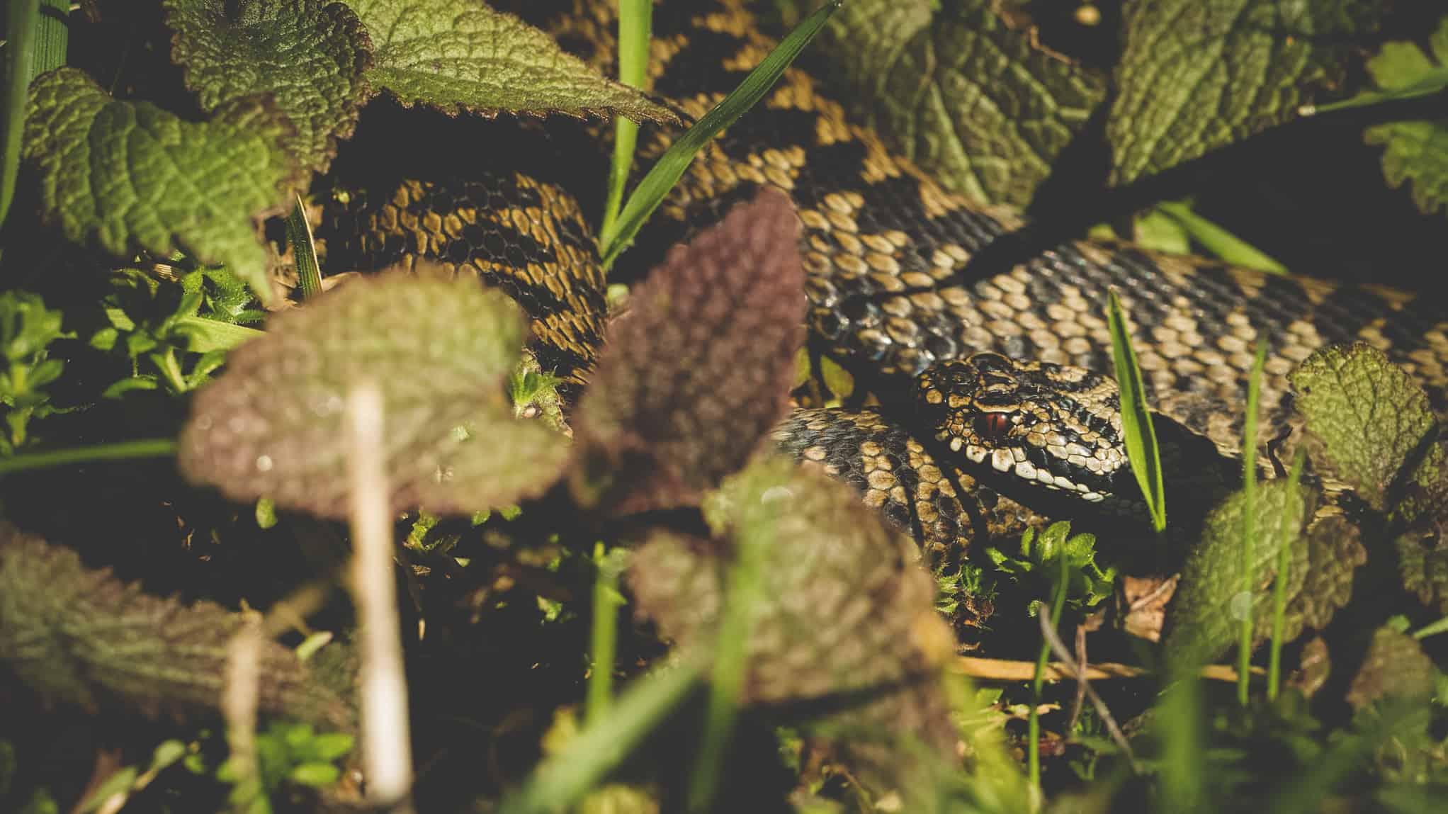 Explore a mosaic of habitats